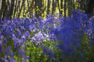 träd och blommor i en skog foto