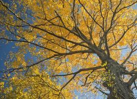 skog i höstfärger på hösten