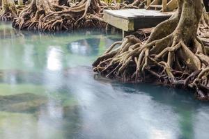 fantastisk kristallklar smaragdkanal med mangroveskog foto