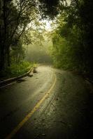 väg igenom i mörk skog med dimma