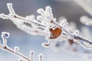 rimfrost på trädet i vinterskogen foto