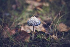 liten svampmössa på skogsbotten foto