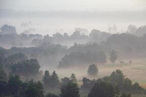 skog och äng i dimman