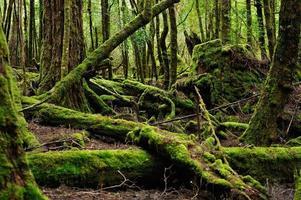 mossig skog, foto