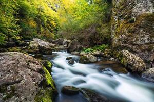 bergflod som rinner genom den gröna skogen