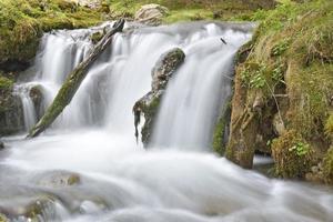 djup skog vattenfall foto