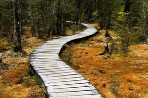 slingrande skog gångväg