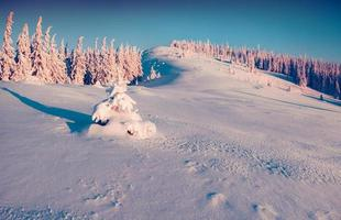 soligt vinterlandskap i bergskogen.