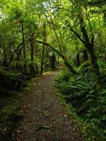 Nya Zeeland skog foto