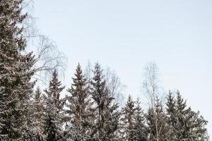 snöig vinterskog med snötäckta träd foto