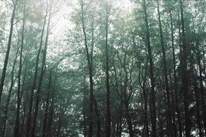 höstlandskap med blandad skog i dimma foto