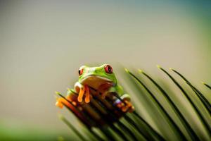 regnskog tropiskt tema med färgglad groda foto