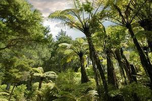 tropisk skog nära hahei foto