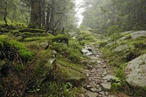 spår i vild skog foto