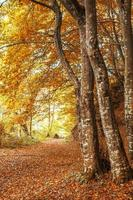 träd i skogen på hösten