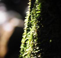 mjukt fokus mossa i skogen,