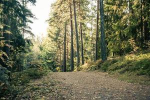 joggingspår i skogen