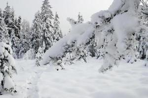 snöig trädgren foto