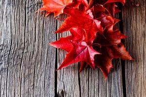 höst skog bakgrund. falla på löv på vittrade bord