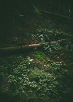 solen lyser upp den österrikiska skogen foto