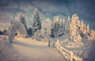 vackert vinterlandskap i bergskogen. foto