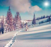 soligt vinterlandskap i bergskogen foto