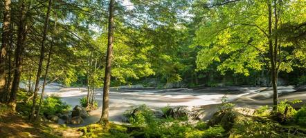 panorama över en flod i skogen