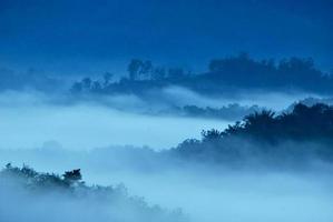 lager av skog under tidig dimmig morgon