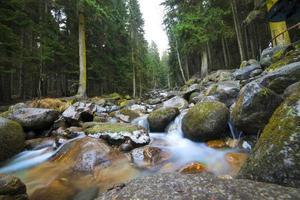 vatten hösten vårsäsongen ligger djup skog foto