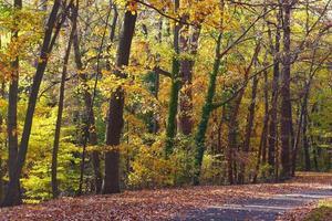vägen i skogen under hösten.