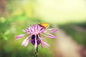 skog blomma
