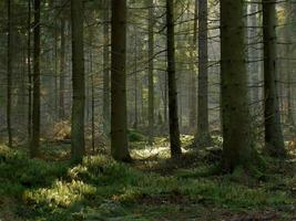 mörk skog foto