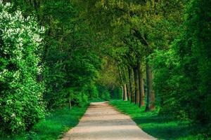 vacker grön skog. skogspark vägvy foto