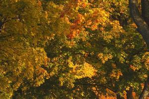 färgglad höstskog