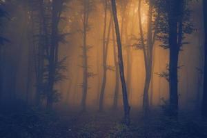 orange nyansdimma i mörk skog foto