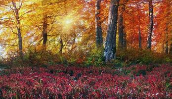 gyllene alpina skogar foto