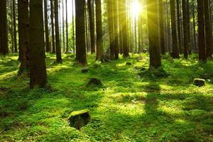sommar i skogen. foto