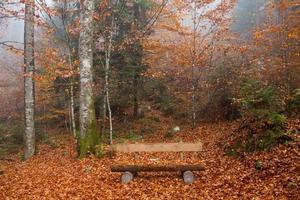 Tyskland, berchtesgadener mark, höst skog, bänk foto