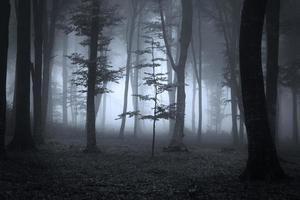 skräckträd i mörk dimmig skog foto