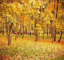 livlig gul skogspark