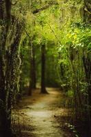 Louisiana Forest, spansk mossa