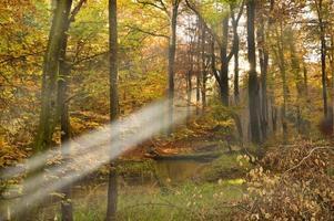 höst i skogen foto