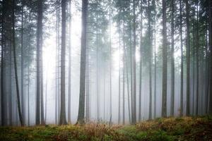 mystisk dimma i den gröna skogen foto