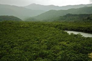 tropisk regnskog