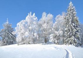 vintertid i den bayerska skogen, Tyskland