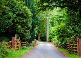 landsbygdsväg genom skogen foto