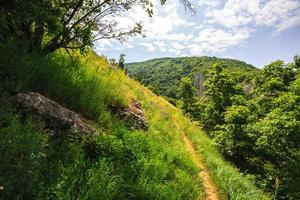 grönt bladverk och stig i skogen foto