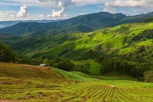 landskap med grönt majsfält, skog, berg foto