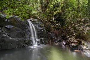 litet vattenfall i skogen