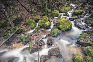 liten bäck i svart skog foto